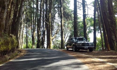 COSTA-RICA-PINE-FOREST.-MERCEDES-CLASSIC-LIMOUSINE-ADVENTURES..jpg