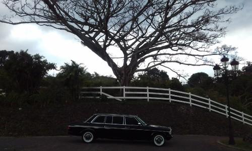 SPOOKY-TREE-IN-COSTA-RICA.-MERCEDES-LIMOUSINE-TOURS..jpg
