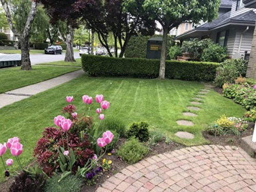 Babylongardensbc.ca is the best gardening service provider in Vancouver. We are serving as a trusted and Expert caretaker of your garden at reasonable prices. Visit our site for more details.  http://babylongardensbc.ca/