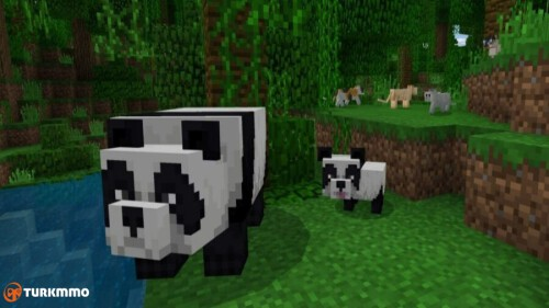 Featured-How-to-Breed-Pandas-in-Minecraft-900x506.jpg